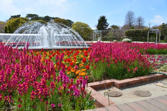 豊橋総合動植物公園(のんほいパーク)大花壇